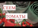 Томаты Посев Томатов Рассада в Улитке Урожай Гарантирован