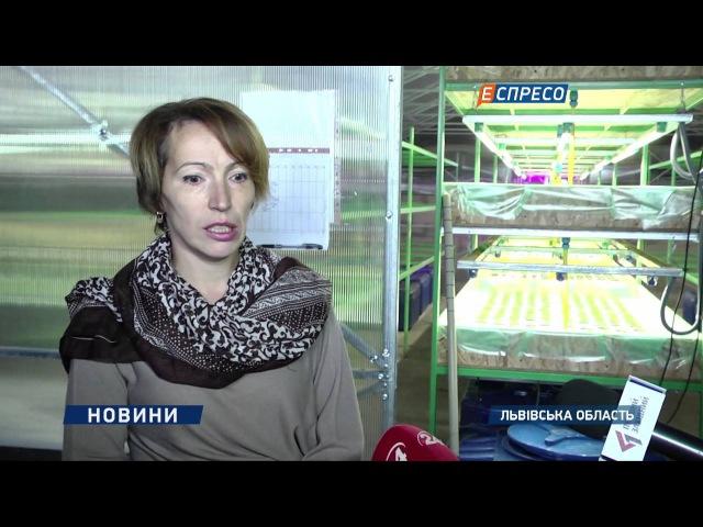 На Львівщині вимушені переселенці зі Сходу відкривають свій успішний бізнес