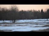 Белый снег и белые журавли