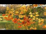 Жёлтый клён. Дворовая песня 70-х годов
