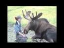 Человек и дикие животные, необычная дружба.