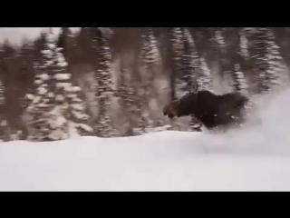 Ничего  особенного....  просто   лось   пробежал ...