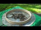 Making the Harmonic Shamanic Drum with Gaia's Workshop
