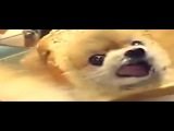 Funny Dogs Rap Denzel Curry - Ultimate