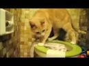 Кот преподал мастер-класс пользования туалетом