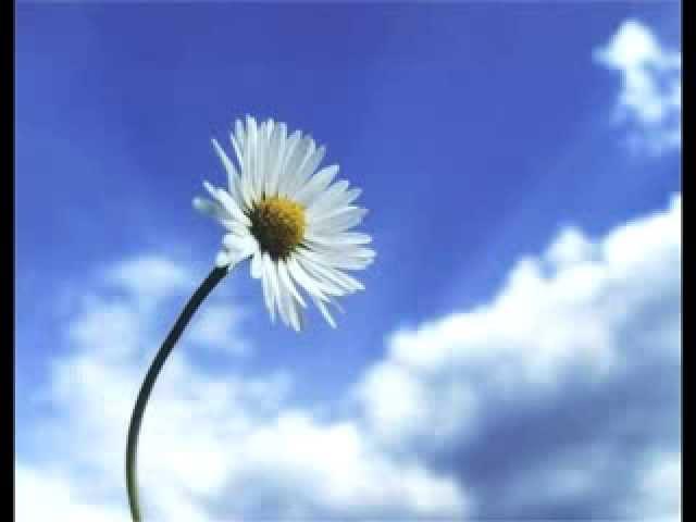 Meditazione sui 4 petali del 1° chakra