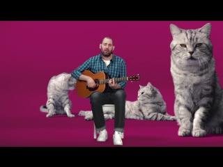 Музыка из рекламы Whiskas - Котозависимость (Семён Слепаков) (Россия) (2017)