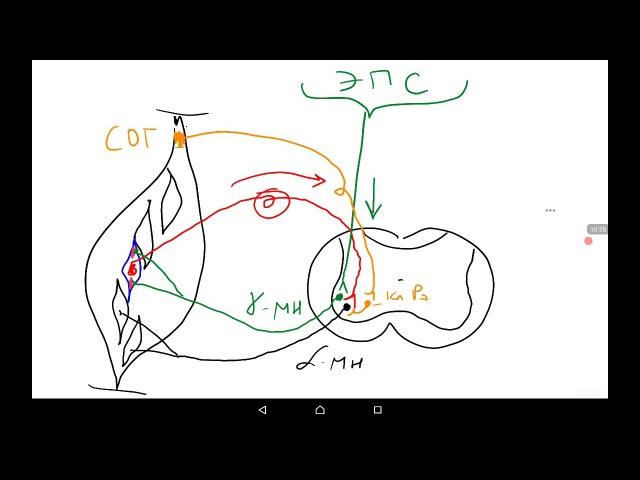 Организация двигательных функций