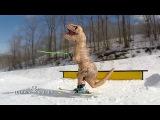 Skiing Dinosaurs-T REX-Hidden Valley Resort