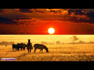 African Music | African Savannah | Relax, Study Ambience