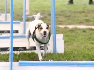 Czech FLYBALL Championship 2011 - SLOW MOTION MOVIE by www.DogSports.cz