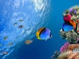Коралловый риф 3D Подводный мир Египта. Удивительный фильм.