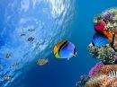Коралловый риф 3D Подводный мир Египта Удивительный фильм