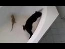 Кот и маленький варан