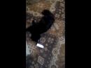 мой кот и валерьянка