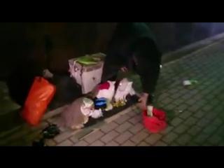 Неадекватная женщина издевается над кошками в Москве.