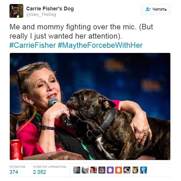 Новости Звездных Войн (Star Wars news): Осиротевший пес Кэрри Фишер стал любимцем интернет-пользователей
