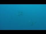 Кто-нибудь видел такое? океан - волшебный (смотреть с 30 сек)