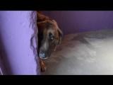 Собака не знает , как реагировать на доброту и ласку ...