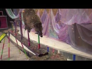 Цирк зверей и лилипутов 2016