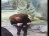 Tiger Pounces at Woman on Other Side of Glass ( FULL VIDEO )