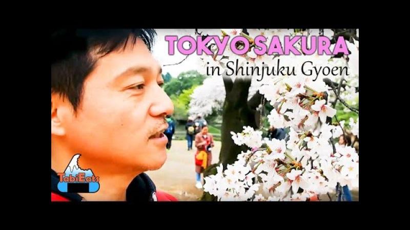 Cherry Blossoms in Shinjuku Gyoen Park 2016 (Solo Bento Picnic)