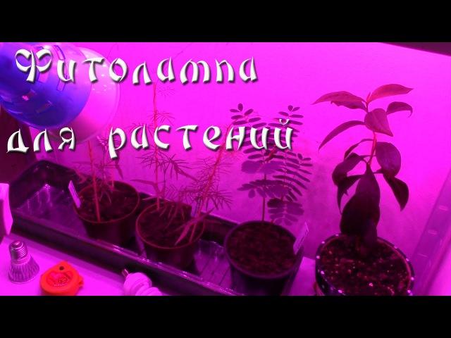 Светодиодная фито лампа для подсветки и досветки растений