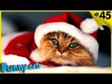 Коты и Елки! С Новым годом и Рождеством!