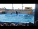Дельфинарий Архипо-Осиповка 2016