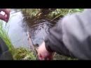 Рыбалка - на выживание - Бешеный клёв окуней