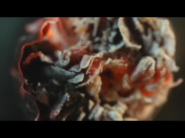 Cigarettes In Macro - Smokin beauty