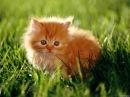 Смешные кошки Часть 156 - 30мин смеха