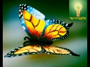 Cómo crear mariposas de lata aluminio♥