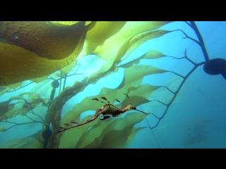Большое путешествие вглубь океанов   HDRip (AVC)