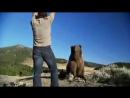 Человек и дикие животные, необычная дружба