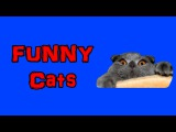 Funny cats I Fails cats video I Веселые кошки