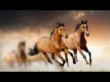 APACHE The Shadows - Beautiful HORSES
