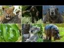 Животные и птицы для детей, их голоса и название Learn Animals Birds for kids Name and sounds