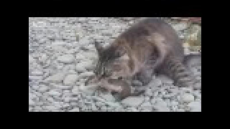 Кот поймал ласку.