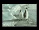 Epic pingouin