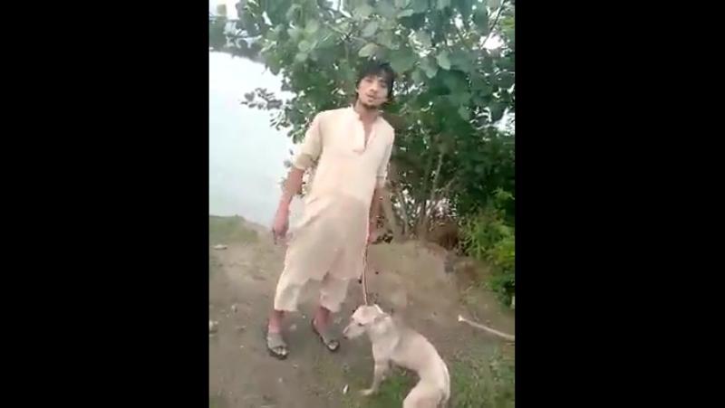 Ein unschuldiger Hund wird gehängt und erschlagen