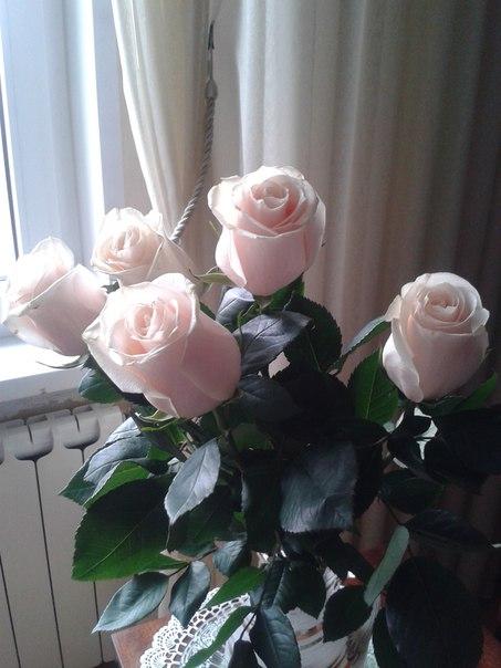 Фото №421227630 со страницы Людмилы Хомяковой