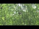 Птичий щебет в мае - Birdsong in May