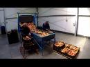 Wywrotnica stacjonarna KRÓLIK sortowanie jabłek