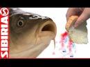СУПЕР хлеб для рыбалки, насадка на карася и белую рыбу Пылящий хлеб Как насадить ...
