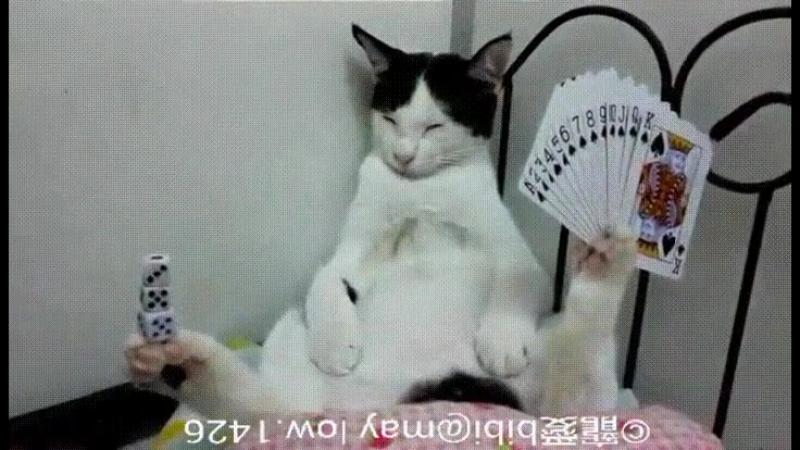 Кот который познал Дзен ;)