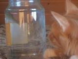 первая встреча Кузя с рыбой