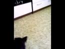 Рич и мармеладный мишка