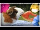 ✿ Прикольные Животные! ✿ Смешные Видео Про Животных! ✿