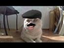 Говорящий кот Валера - вернулся с отпуска